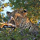 Winking leopard by Anthony Goldman