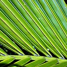 Nikau Palm  by Tony Foster