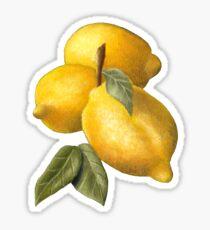 Lemons in oil Sticker