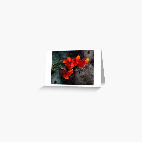 Orange Calla Lilies on Gray Greeting Card