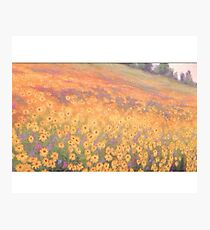 Wildflower Mural without text Photographic Print
