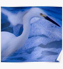 Seabird Poster