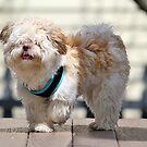 Teddy Dog by Linda Crockett