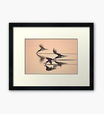 Black Skimmers Framed Print