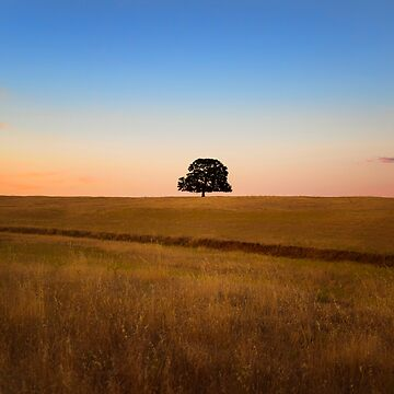 One with Nature a single tree at sunset by MarniePatchett