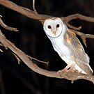 Night Owl by CBoyle