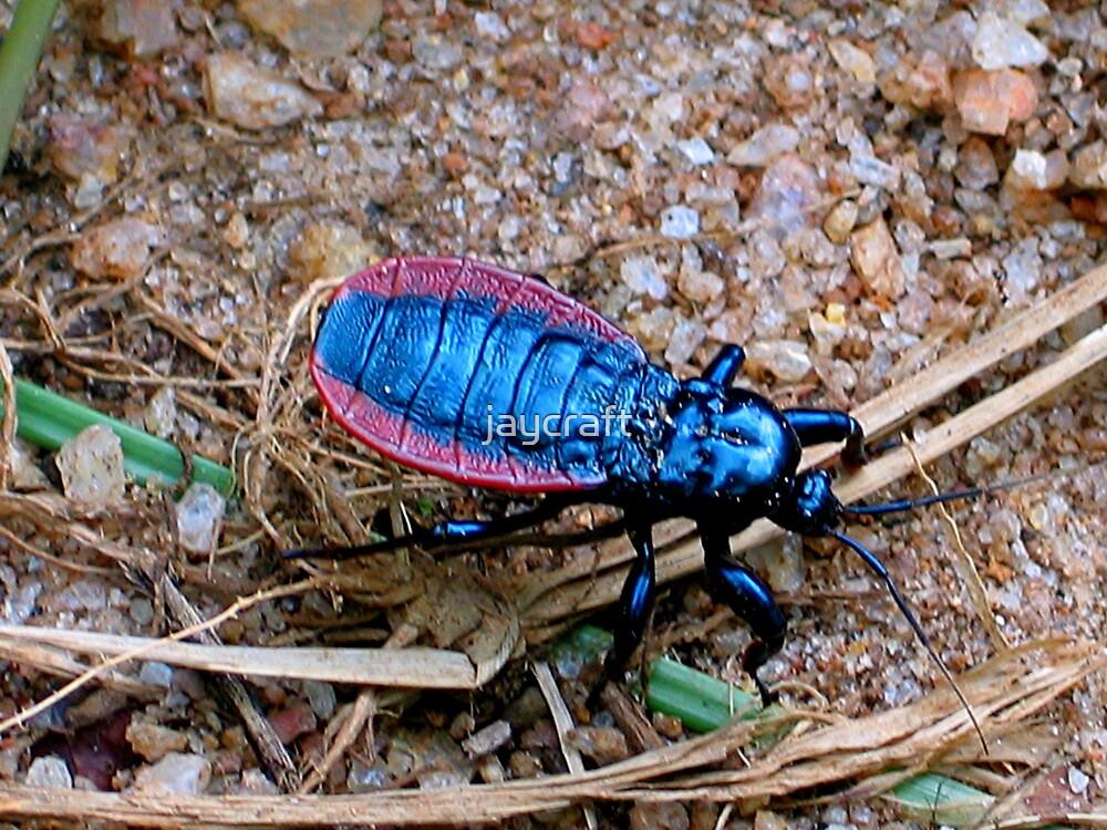 Beetle beauty 2 by jaycraft
