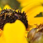 In the yellow by Denitsa Prodanova