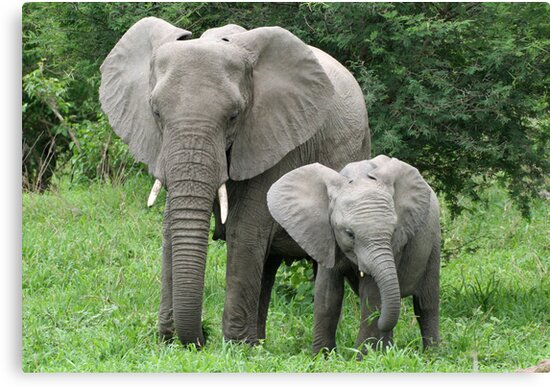 Mother and Baby Elephant by Rebecca Conroy