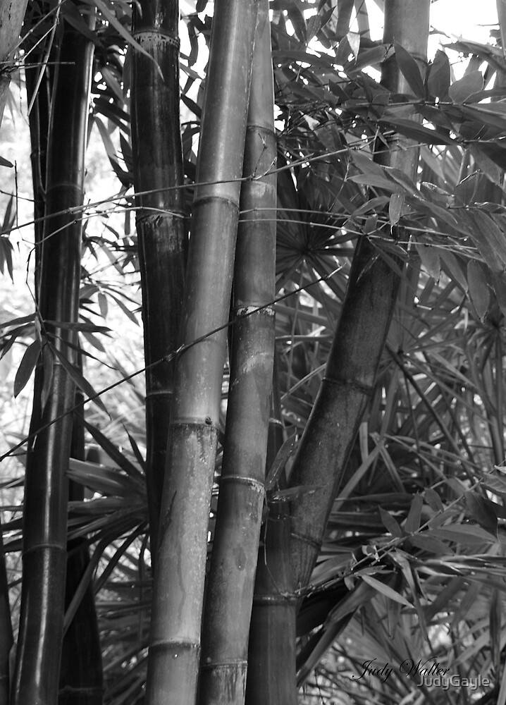 Bamboo In Black and White by Judy Gayle Waller