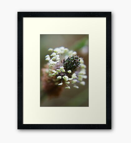 White wreath (from wild flowers collection)  Framed Print