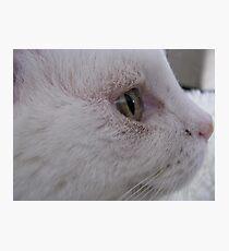 Casper (the little white ghost) Photographic Print