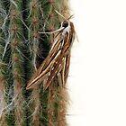 Hawk Moth  by sienebrowne