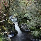 a delightful creek in the Enchanted Forest by Gaylene Norton