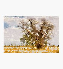 lonely bottle tree Photographic Print