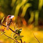 Just a Sparrow - A View  by Carl Gaynor