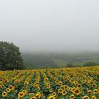 Rainy day by Ana Belaj