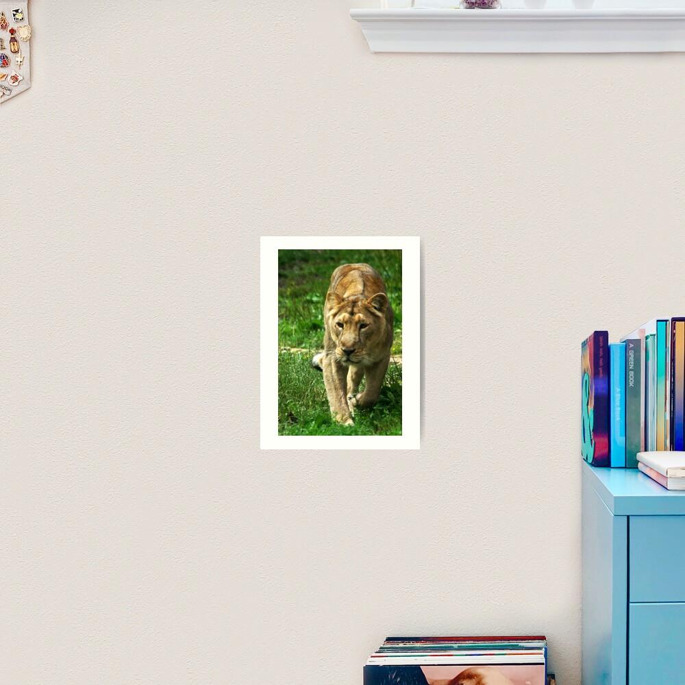 Kalinga the Asiatic Lioness Art Print