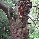 Old Oak Tree by leelee