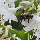 Fun with Bumble Bees by LarryB007