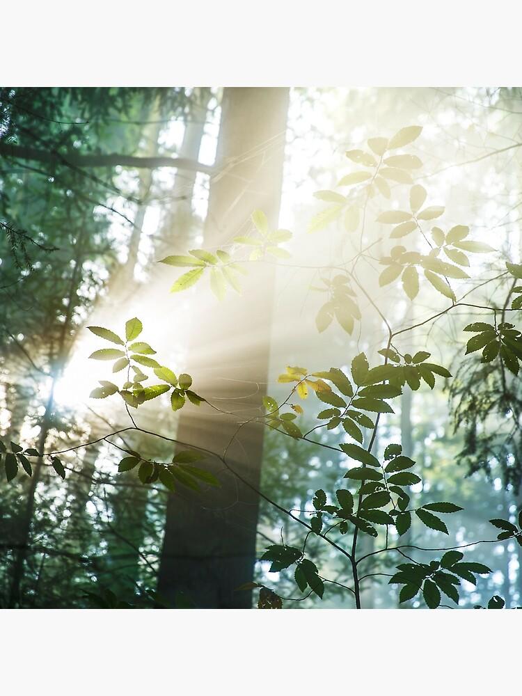 «Amazing Light» par patricemestari