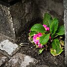 City Flower by George Limitsios