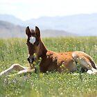 Pretty Spring Colt  by Nicole  Markmann Nelson