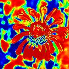Abstract Zinnia by Cynthia48