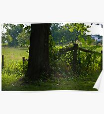 Old Tree & Fence Poster