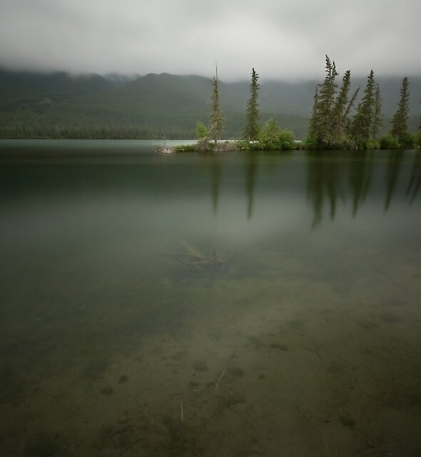 Shades of Green by Kevin  Kroeker