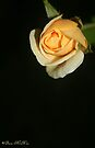 A Solitary Rose by Briana McNair