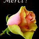 Merci! - (Thanks!) by bubblehex08
