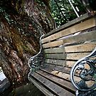 Old bench in the autumn park by yurix