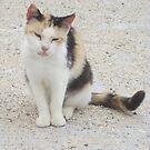 Stray Cat in Italy by ladymalchav