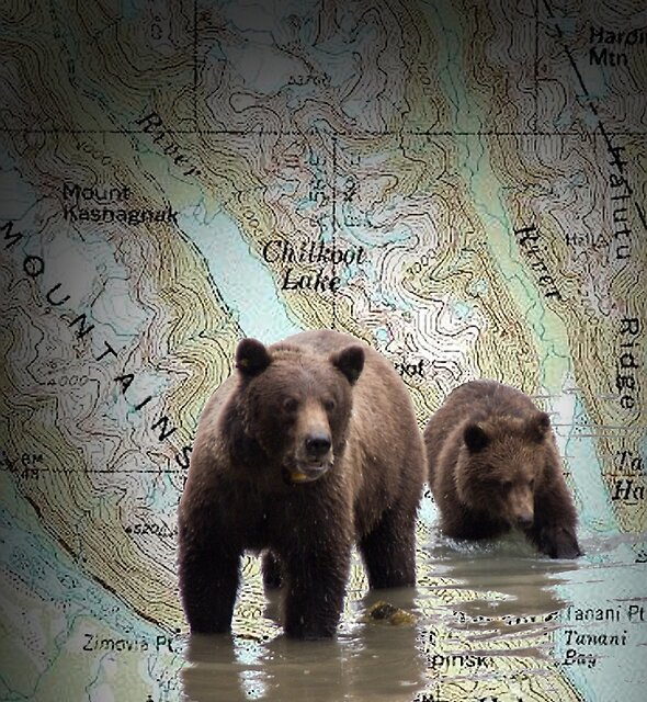 Bears on the Chilkoot Map by Yukondick