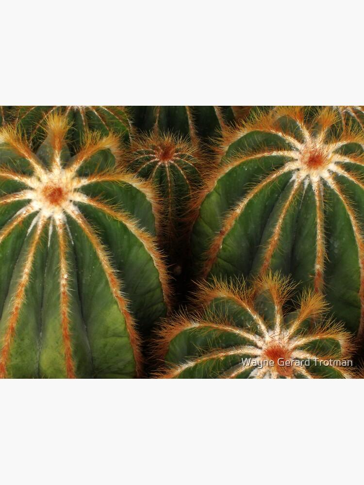 Cacti by redmoondragon