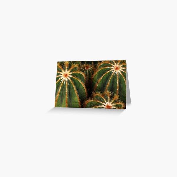 Cacti Greeting Card