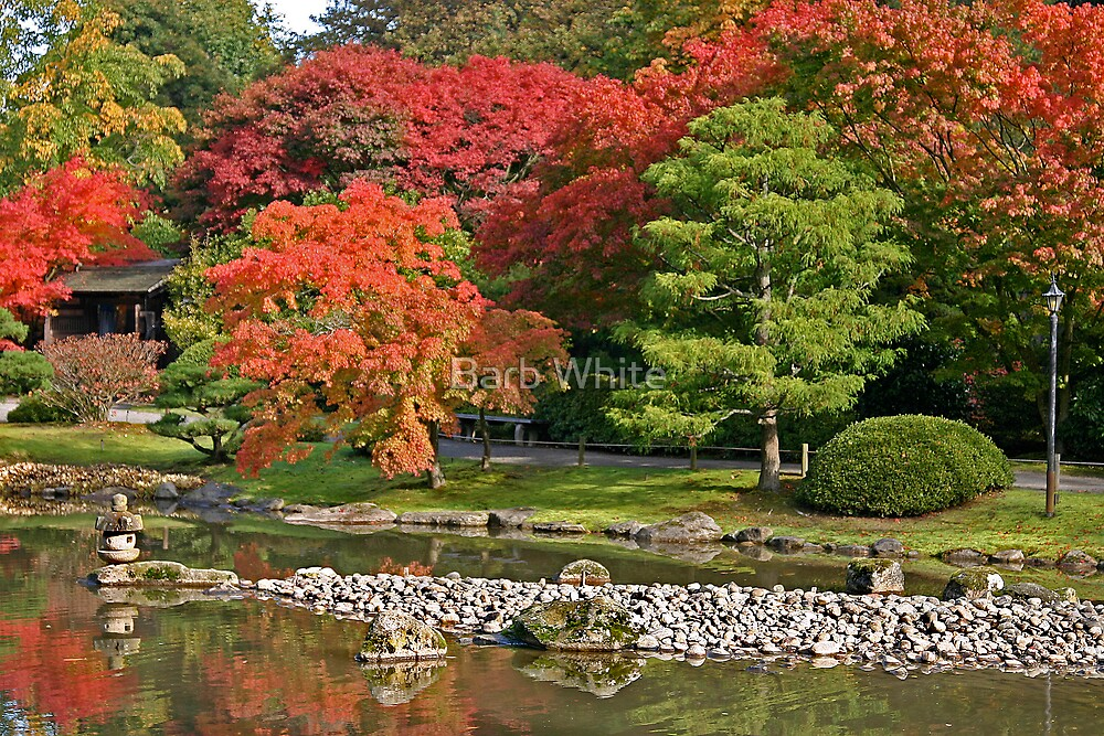 Fall at Seattle Japanese Gardens by Barb White