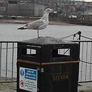 Seagull ignoring sign by Teuchter
