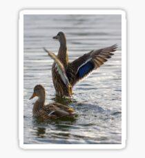 Mallards Flap On Water Sticker
