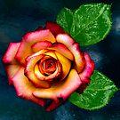 BEAUTIFUL ROSE by LudaNayvelt