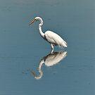 White  Egret by Len Bomba