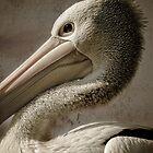 Pelican Pete... by Lisa Kenny