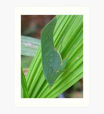 Leaf Insect Art Print