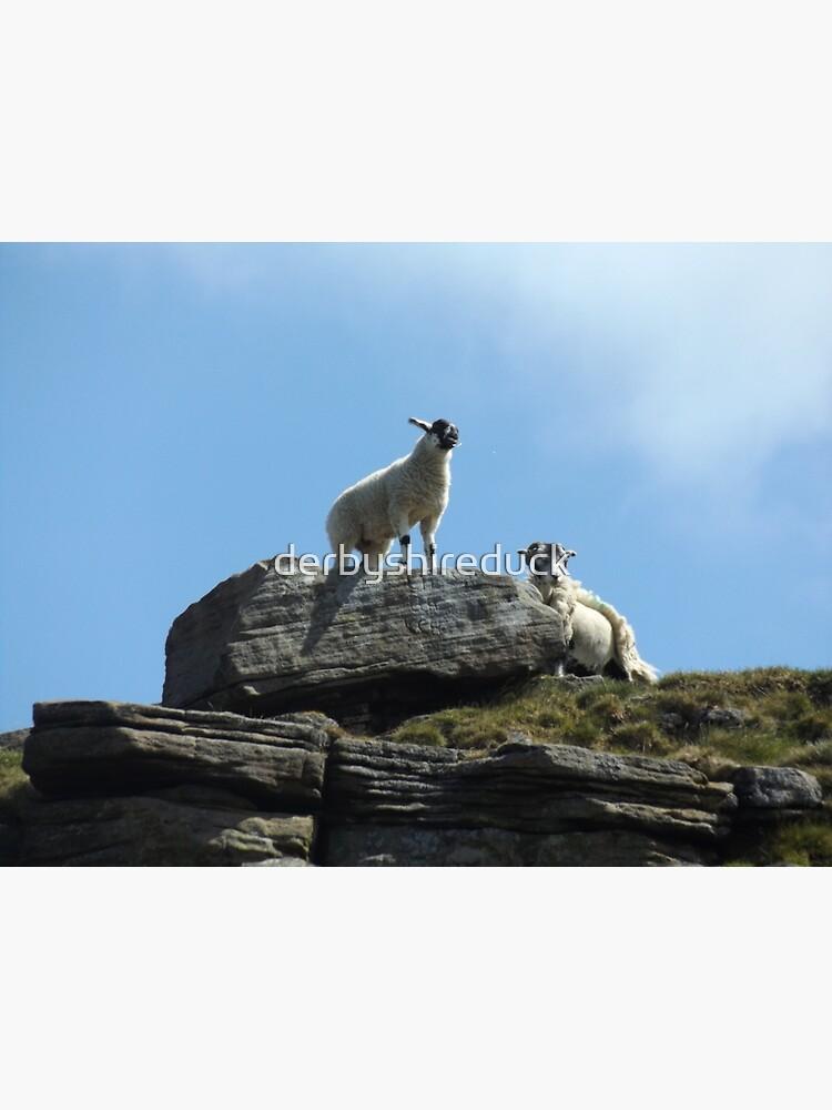 Sheep on a rock by derbyshireduck