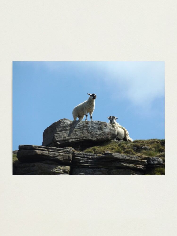Alternate view of Sheep on a rock Photographic Print