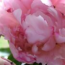 Soft Pink Beauty no-4 by Orla Cahill