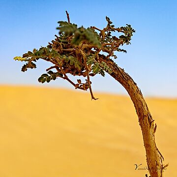 Desert Plant by Photograph2u