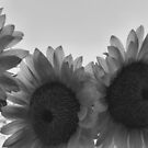 Sunflowers by NEmens
