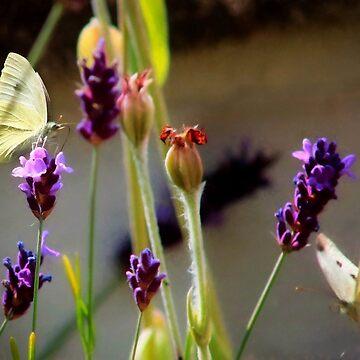 White butterflies on purple flowers by missmoneypenny